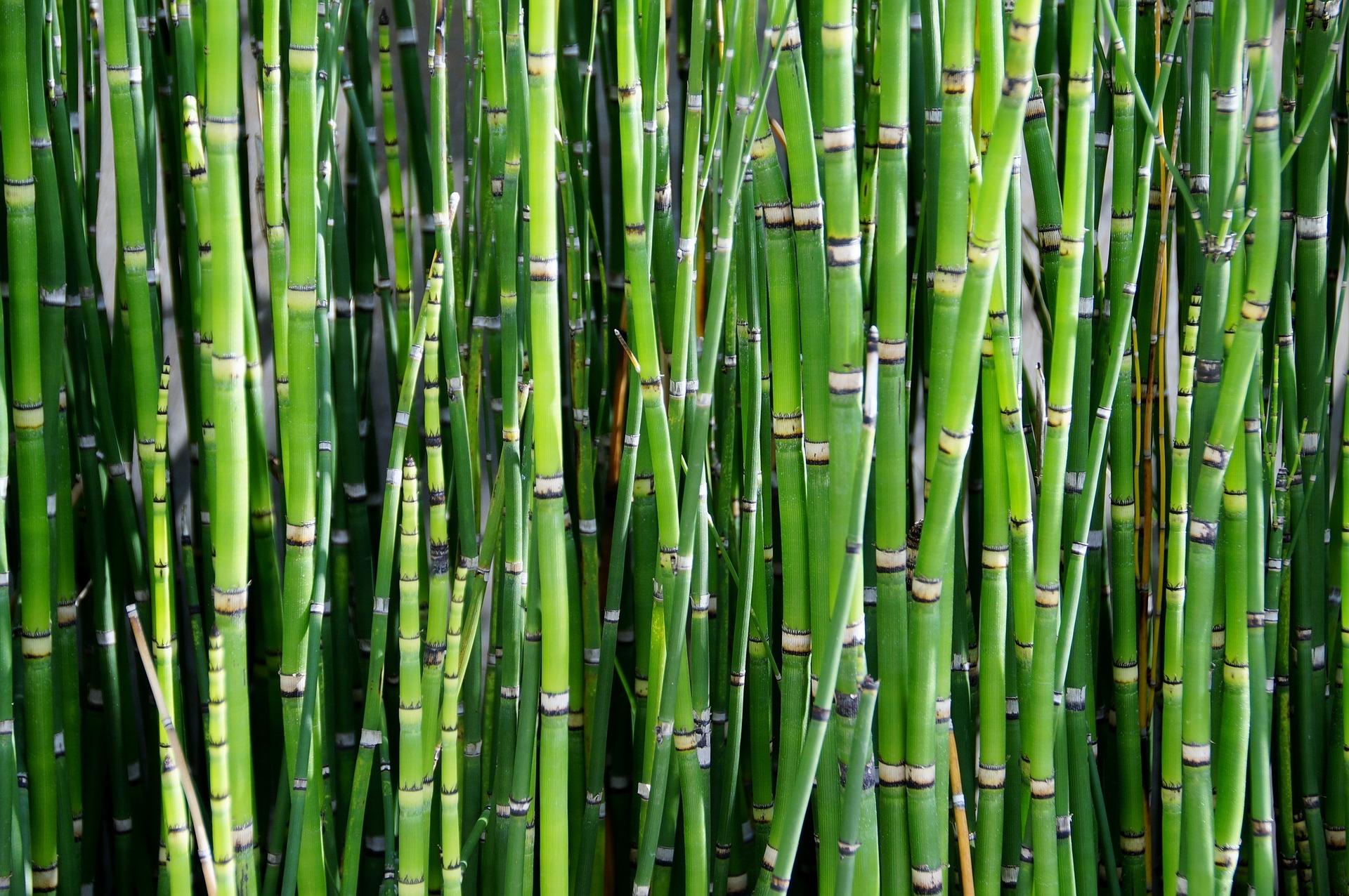 Spéciale Bambou